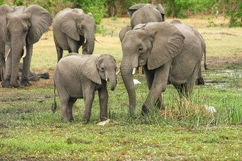Safari - Afrique du Sud